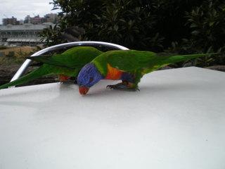 Australia_2008_464